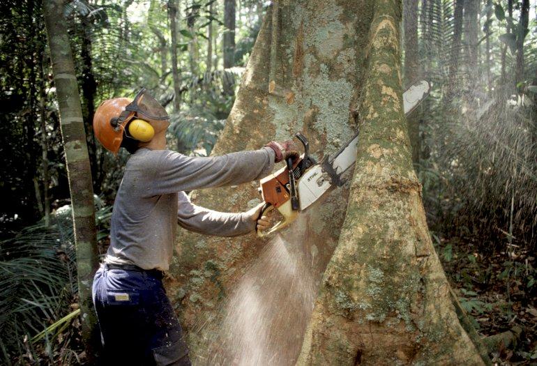 Det ser sort ud for verdens regnskove, hvis ikke efterspørgslen begrænses til bæredygtigt træ. Herhjemme er det især kommunerne, der bør være opmærksomme, mener Jakob Ryding, certificeringsekspert fra Verdens Skove.  Foto: Polfoto