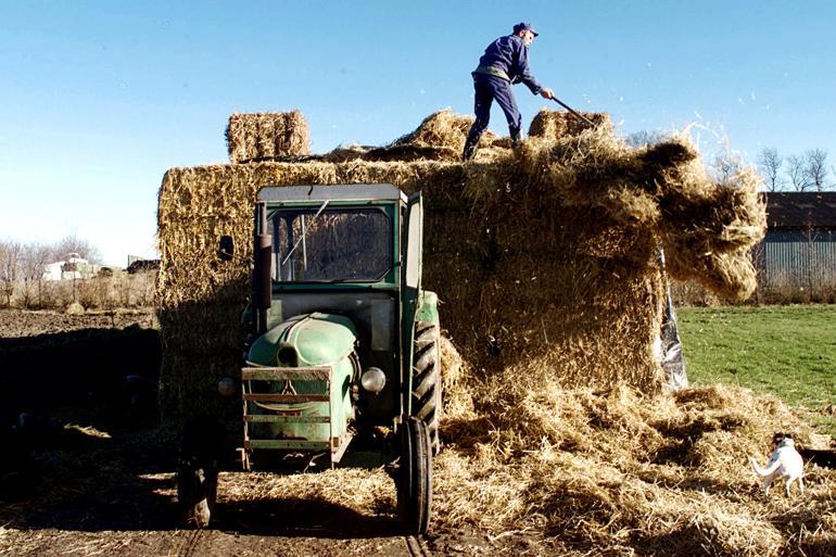 En landmand i Morsø, der ønsker at udvide sin produktion, får meget hurtigere svar på sin ansøgning om miljøgodkendelse end en landmand i Rebild. Foto: Lars Hansen / Polfoto