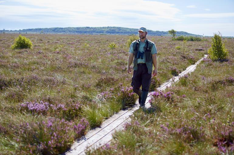 Lille Vildmose i Himmerland er med sine mere end 7.600 hektar Danmarks største landfredning. Her går direktør for Lille Vildmose Centret Bo Gregersen på en plankesti, der fører ud i Tofte Mose.  Foto: Morten Langkilde / Polfot